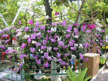 Flowers at Saigon Flower Market